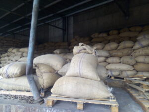 Raw Cashew Nuts Export From Nigeria By Globexia