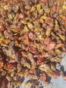 Cameroon Yellow & Black Pepper Export From Nigeria By Globexia