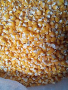 Maize Kernels Export From Nigeria By Globexia